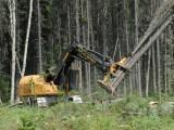 Выписываем лес на строительство